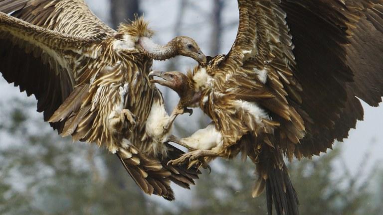 avvoltoi_2819272.jpg