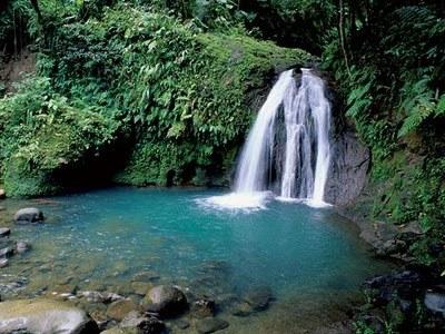 foreste tropicali 1.jpg