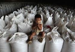 riso-area-amazzonica-della-bolivia-david-mercado-reuters_2808086.jpg